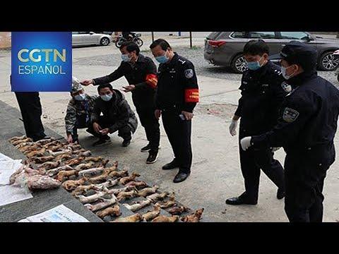 China intensifica las medidas contra el comercio de animales salvajes