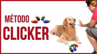 Método clicker - Adestramento positivo - Fotógrafo de cães