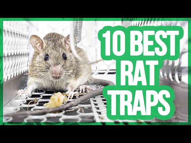 10 Best Rat Traps 2018 | Getting Rid Of Rats