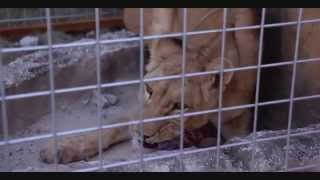 Helly Luv closing down the second worst Zoo in the world. (Gilkant Zoo, Erbil)