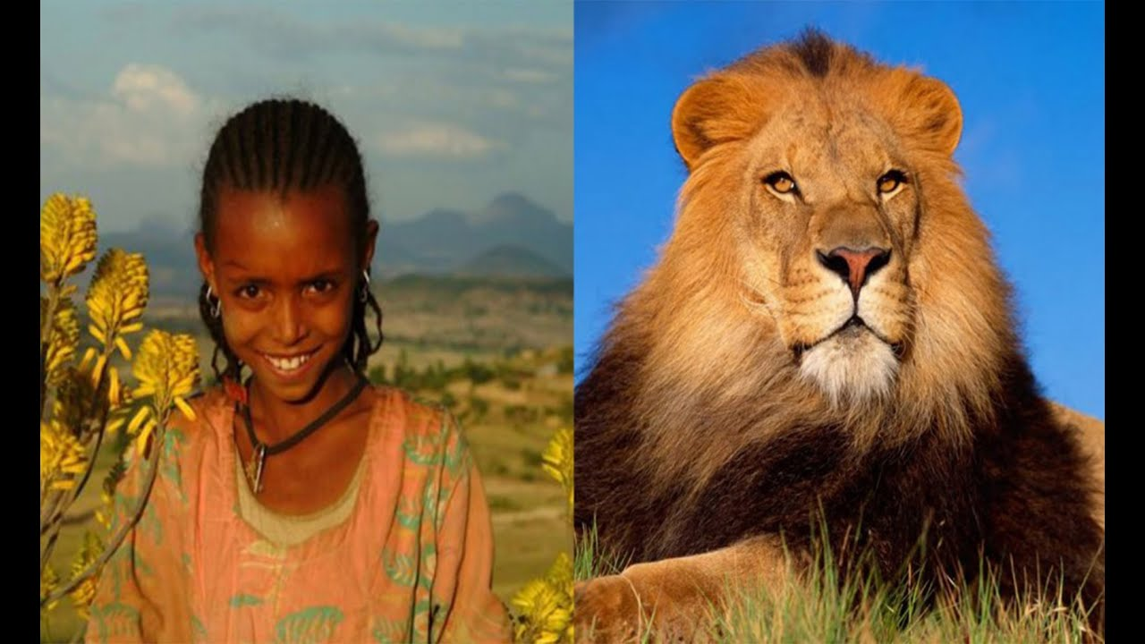 6 Unbelievable WILD Animals That Actually Saved People's Lives