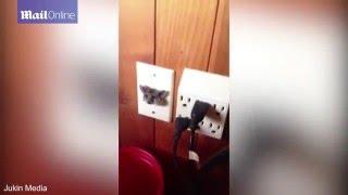 بالفيديو: كيف علق هذا الفأر داخل مقبس كهربائي؟