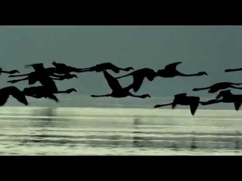 The Cinematic Orchestra   Arrival of the Birds
