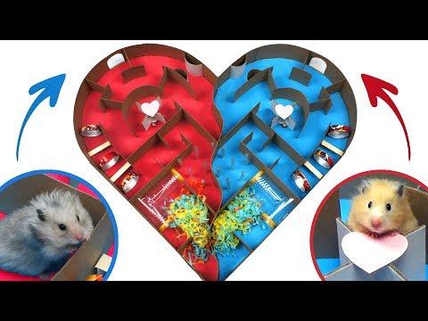 Two Cute Hamsters in Heart-shaped Maze - Hamster Race