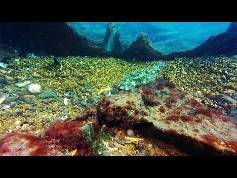 Scuba Diving Winter Quarter Shoals,  Chincoteague Island, VA