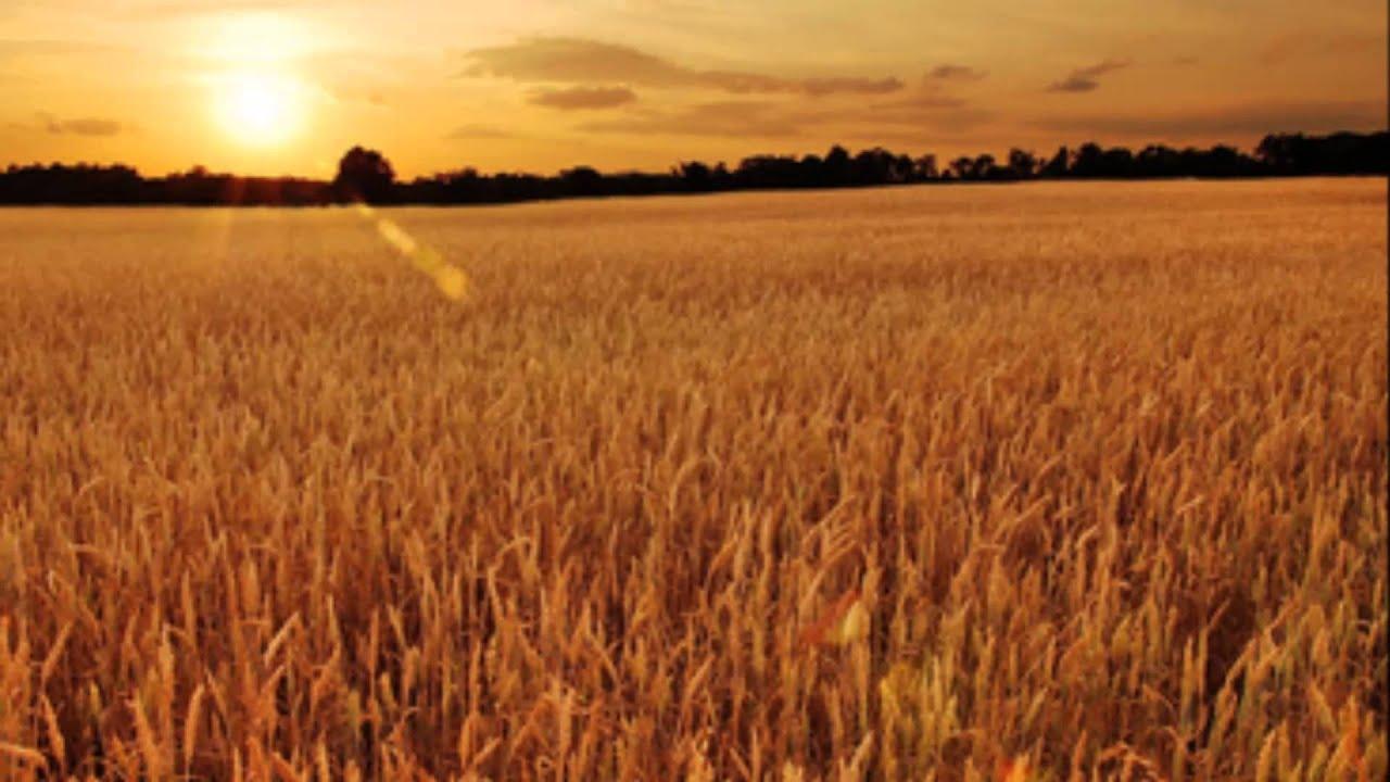麦 の 唄 紅白
