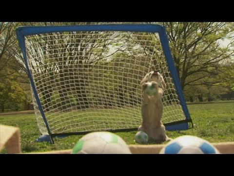 Goalkeeper dog sets record (Guinness World Record)