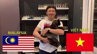 Cùng Trấn Thành, Trấn Xì, và Elsa dự đoán kết quả Việt Nam - Malaysia (15/12/2018) AFF cup