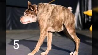 Топ 6 самых страшных собак