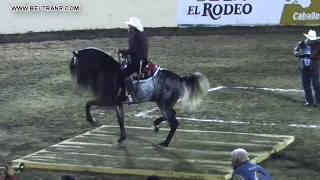 Caballos Bailadores Categoría A - 5 - Feria G Culiacan