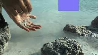 blue lagoon iceland echt lecker