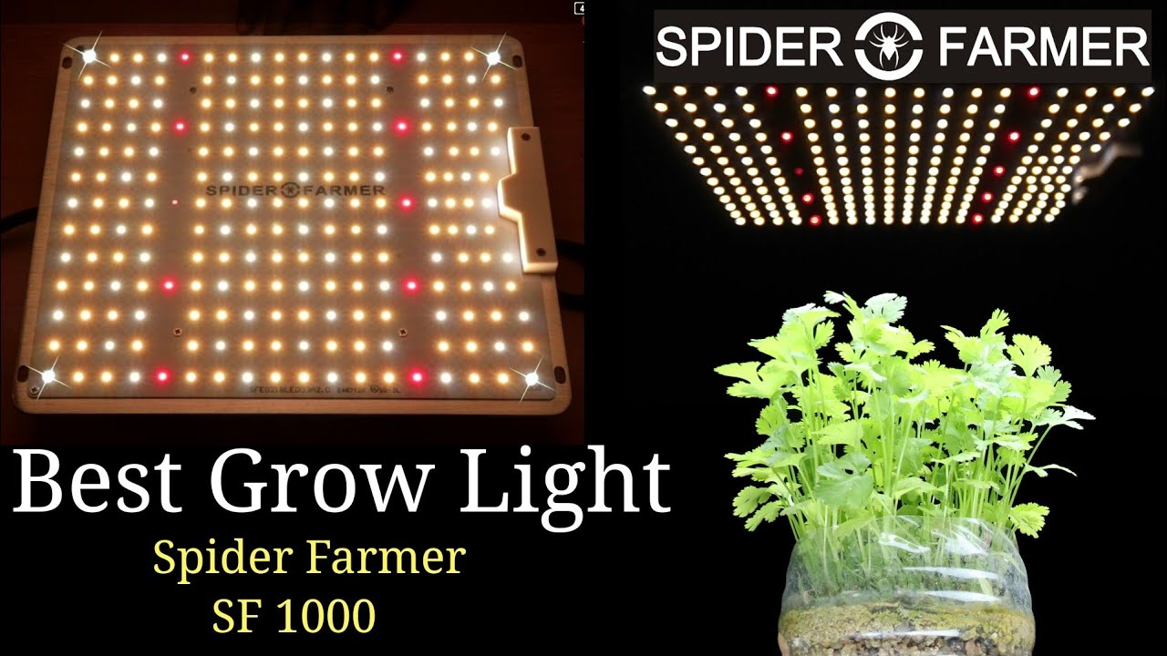 Best Grow Light To Grow Any Plants Indoor Spider Farmer Sf 1000 Best For Bonsai Youtube