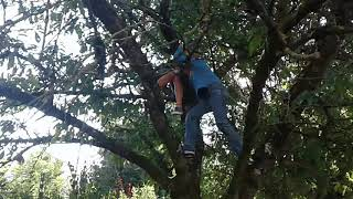 2 types coincée dans l' arbre