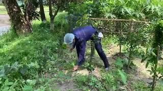 গাছ গাছালি পরিচর্যায় এখন বাংলাদেশ পুলিশ || BD Police News Update