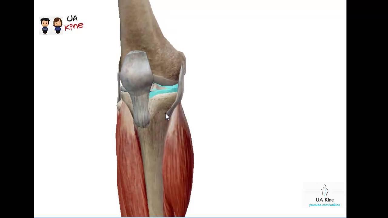 Desgarro Ligamento Colateral Medial Rodilla - YouTube