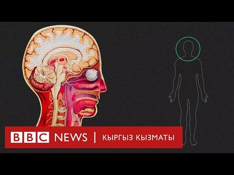 Covid-19 вирусу кишинин денесине кандай таасир этет? - BBC Kyrgyz