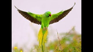Top 10 most beautiful parrots in the world 2019