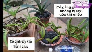 Cách trồng lan Ngọc Điểm (ĐAI CHÂU), Sóc,Báo,Cáo,Chồn,Nhạn