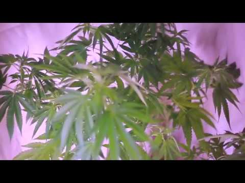 Identifying First Signs of Flowering