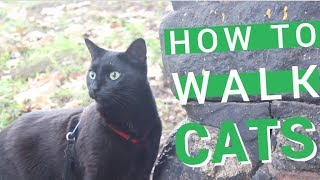 Training Cats to Walk on a Harness Outside | Adventure Cat