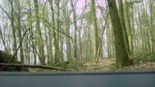 Nitroglycerin (375g) blowing up tree