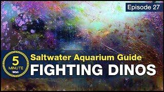 Get rid of Dinos once and for all. How to beat dinoflagellates in a saltwater aquarium?