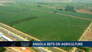 L'Angola mise sur l'agriculture et les investissements du Maroc en Afrique ...