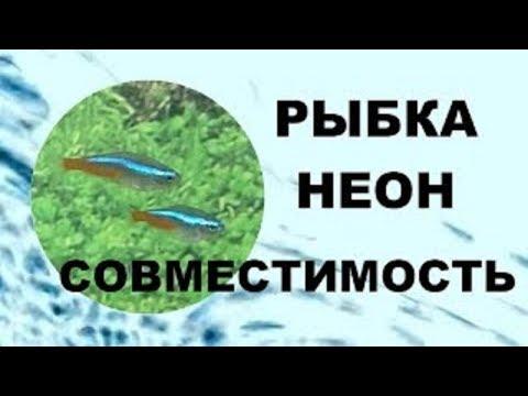 Рыбки неоны  Совместимость аквариумных рыбок