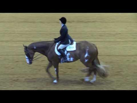 Ellie Becker Hunt Seat Equitation World Show Pattern