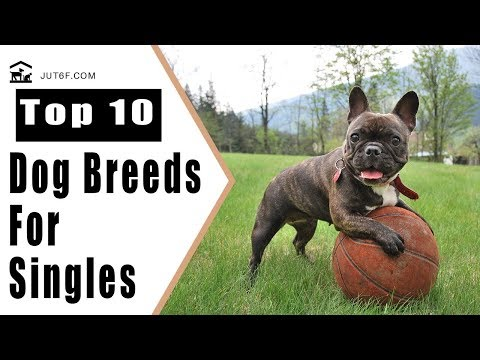 Top 10 Best Dog Breeds For Singles