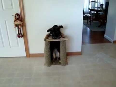 Chien qui mange debout le jardin des animaux youtube - Comment fabriquer un mange debout ...