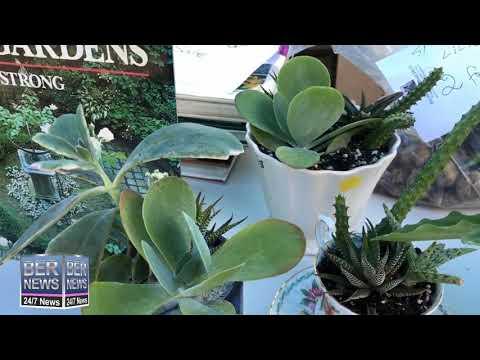 Bermuda Botanical Society Fundraising Plant Sale, October 12 2019