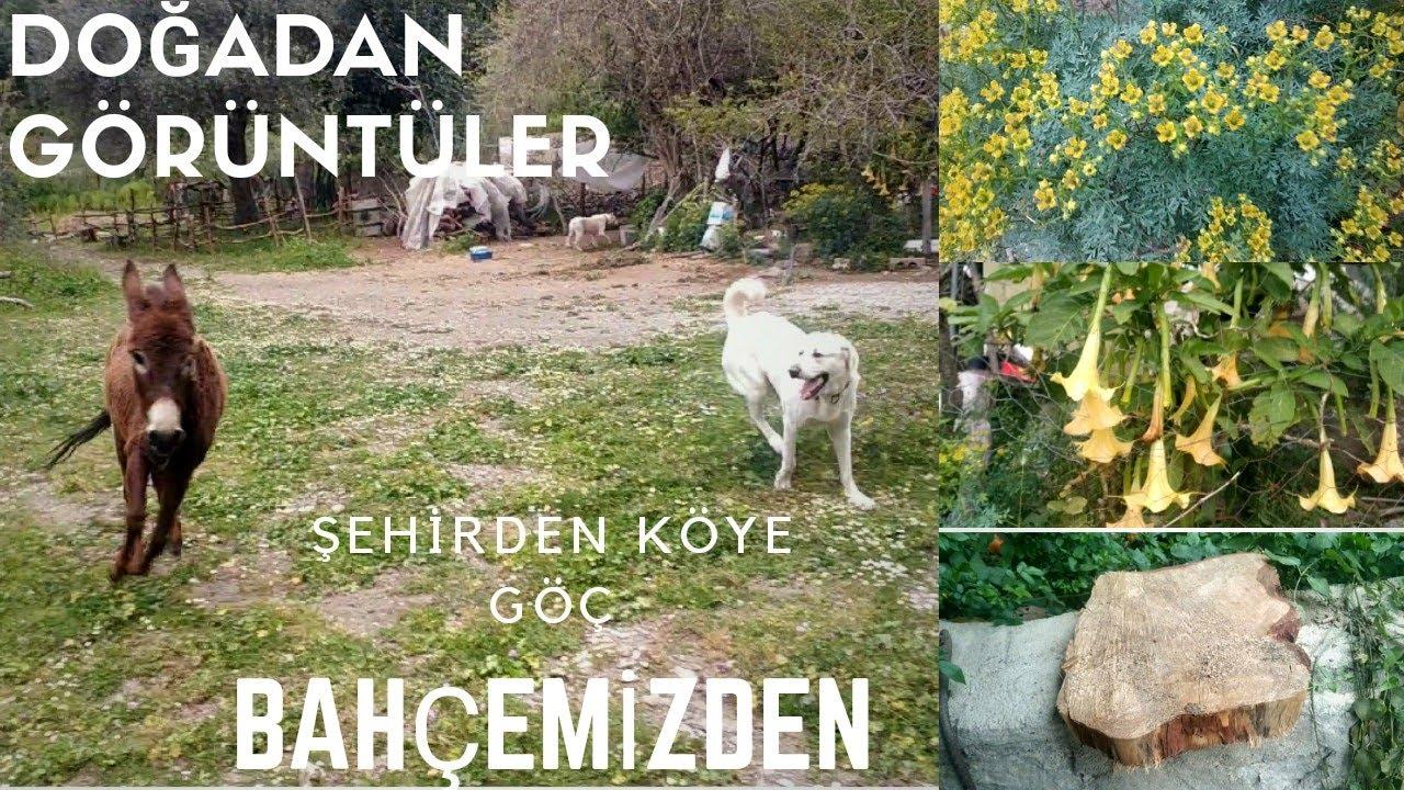 Doğadan Görüntüler | Bahçemiz | Köy Yaşamı | Hayvanlar Alemi | Şehirden Köye Göç | 66.Bölüm