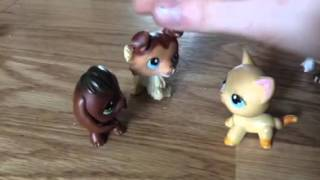 Littlest Pet Shop Blood And Tears Into The Eyes Revenge Feels Bad For The Sausage