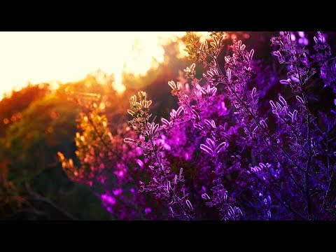 Relaxing Music - peaceful, positive, smooth, light music [Season 1 Best Of]