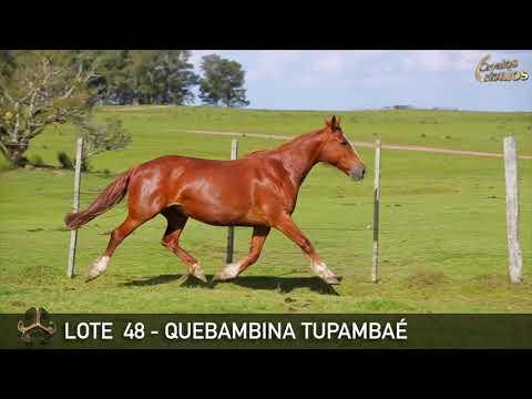LOTE 48   QUEBAMBINA TUPAMBAÉ