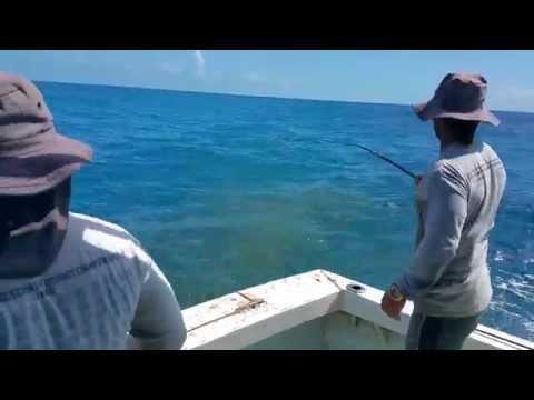 The amazing yellowtail fishing 2015.
