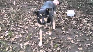 Отдам Собаку породы Метис самка кличка МУШКА Москва