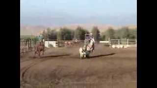 Gray Head Horse For Sale- Barons Silver