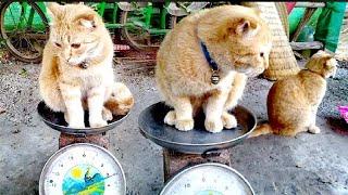 คลิปอบอุ่นๆน่ารักๆของน้องแมว#ตอนหนูไม่ชั่งค่ะ