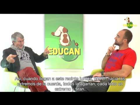 Charlando con Kurt Kotrschal/Talking to Kurt Kotrschal