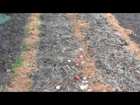 (111)Как выглядит блочно-модульный огород ранней весной.