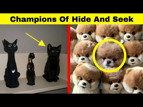 Hilarious Animals Who Are The Absolute Champions Of Hide And Seek