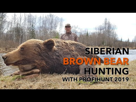 SIBERIAN BROWN BEAR HUNTING WITH PROFIHUNT 2019