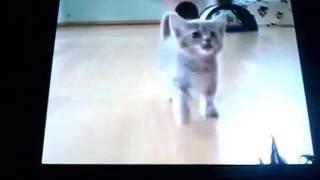 Gadają koty