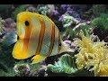 Животные мира Самое таинственное Не видимые хищники Мини чудовища Предел атаки Грань понимания
