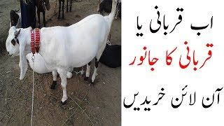 buying online qurbani in pakistan - how does that work