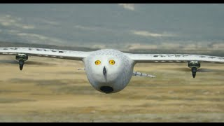 Robot Spy Owl & BoulderCam Film Chick Outfoxing an Arctic Fox