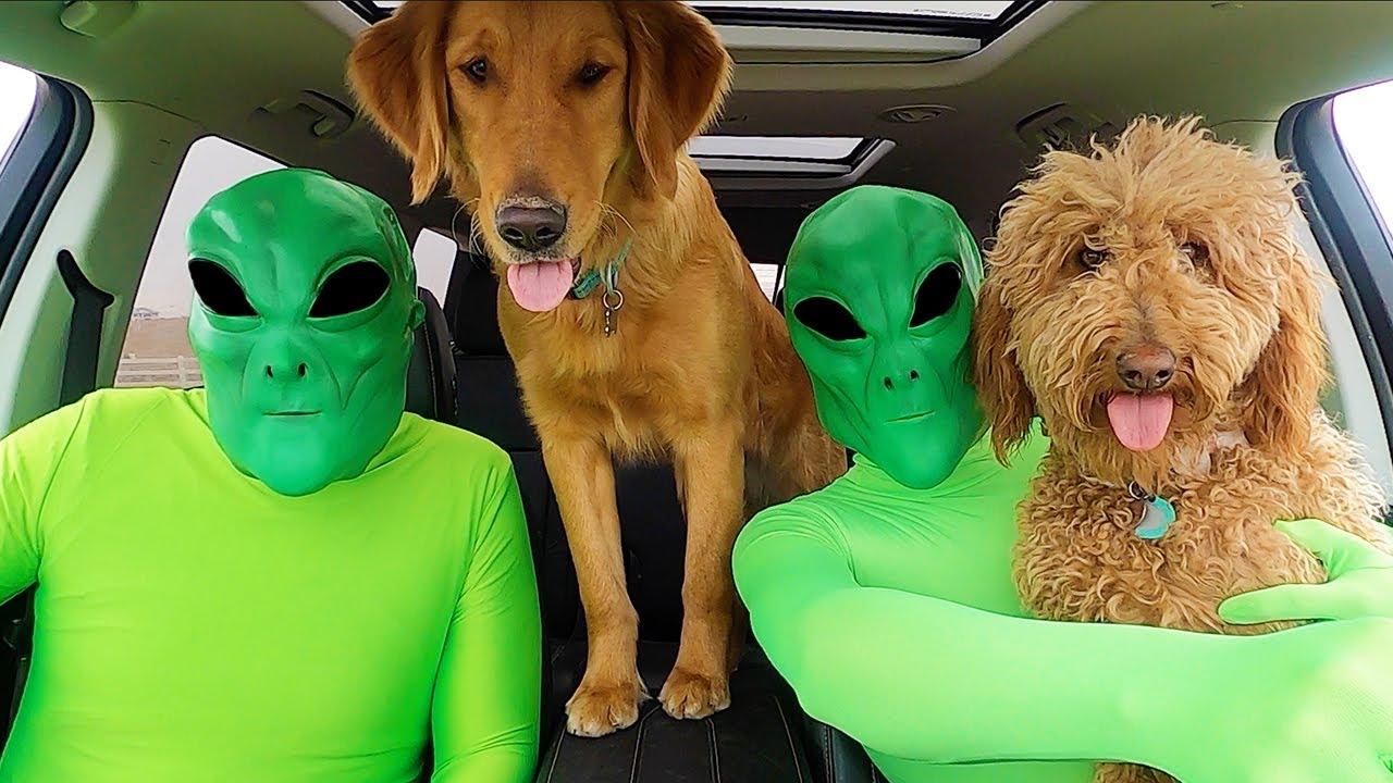 Alien Surprises Puppies With Dancing Car Ride!