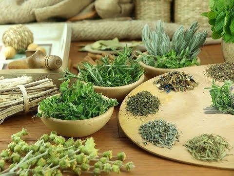 Как снизить аппетит народными средствами на основе трав?